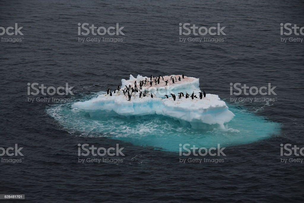 Penguins on iceberg, Antarctica stock photo