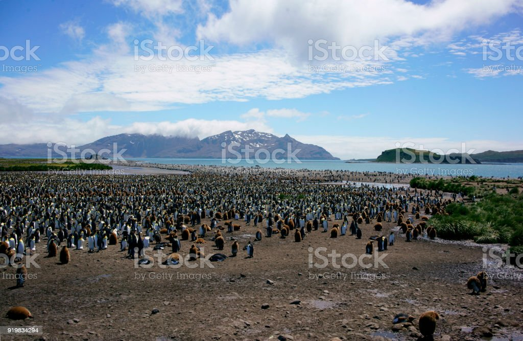 Penguins on Rocky Beach with Snowy Mountains, stock photo
