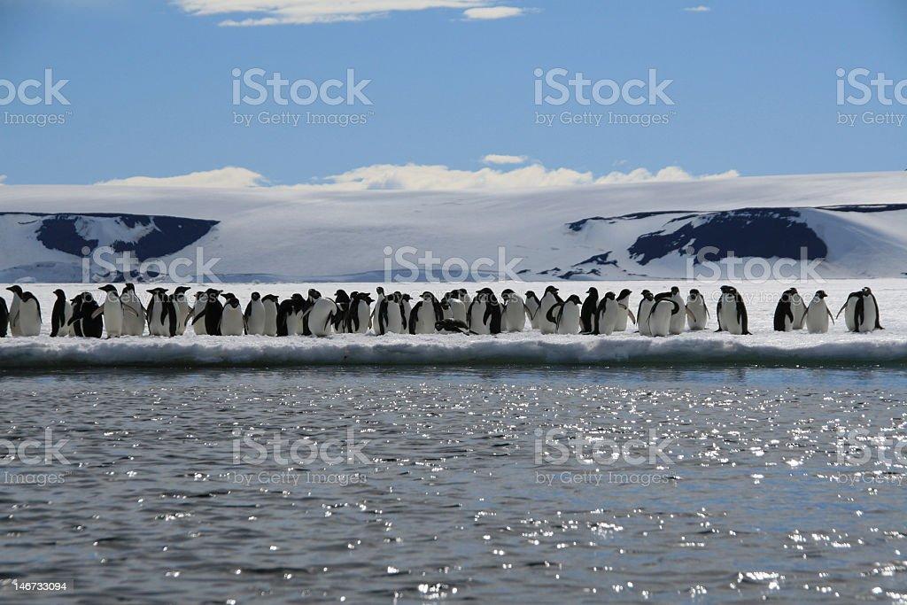 Penguins on the Antarctic Peninsula stock photo