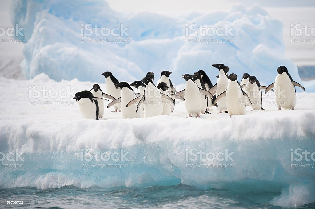 Penguins on the snow stock photo