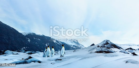 A small group of penguins on a tundra landscape.