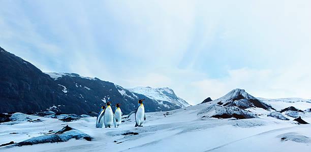 ペンギンの冬のタンドラ - ツンドラ ストックフォトと画像