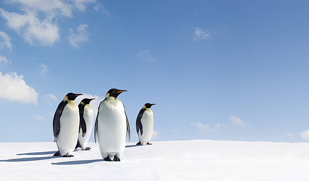 Penguins Penguins in Antarctica emperor penguin stock pictures, royalty-free photos & images