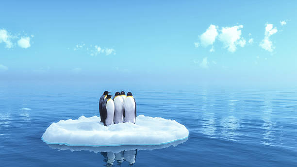 penguins penguins floating on ice ice floe stock pictures, royalty-free photos & images
