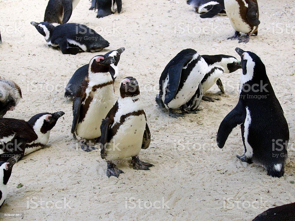 Pinguine stock photo