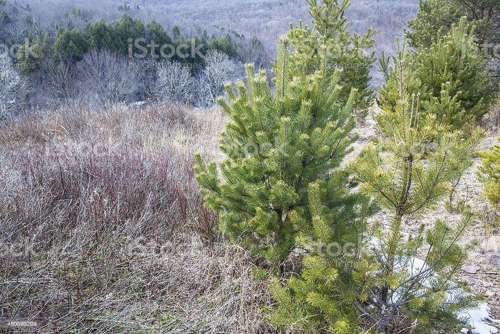 Pennsylvania, Poconos: mountain's forest at early spring stock photo