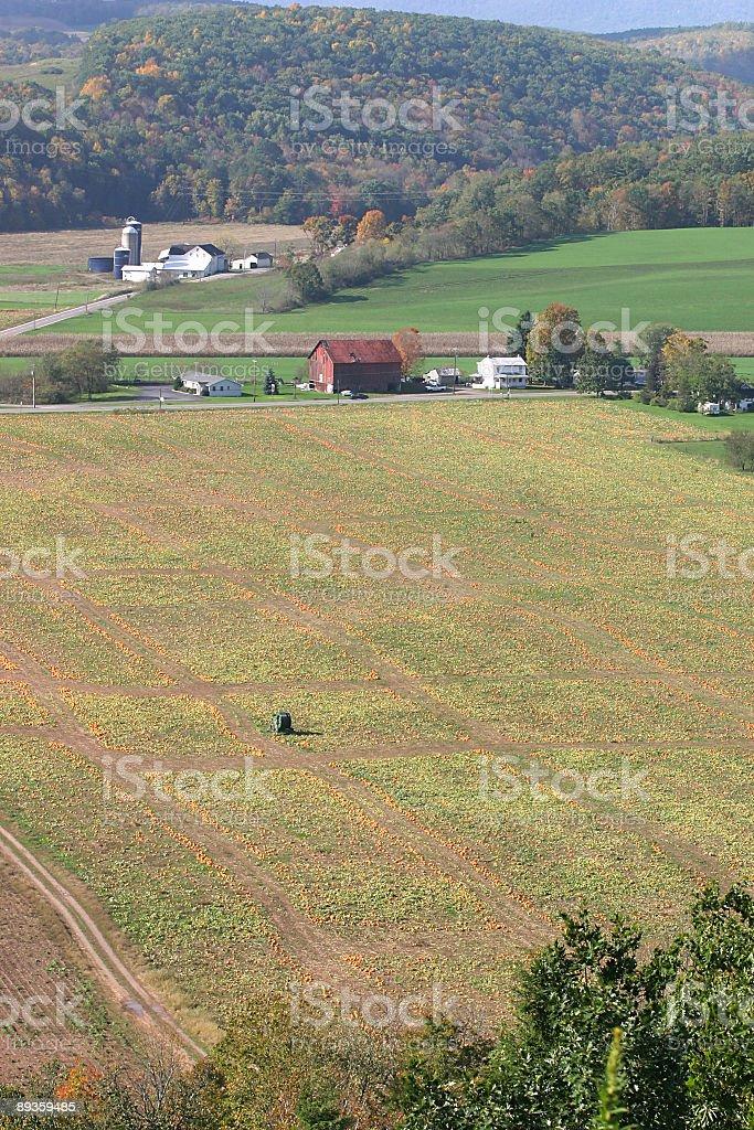 Pensylwania Dynia farm w Jesień zbiór zdjęć royalty-free