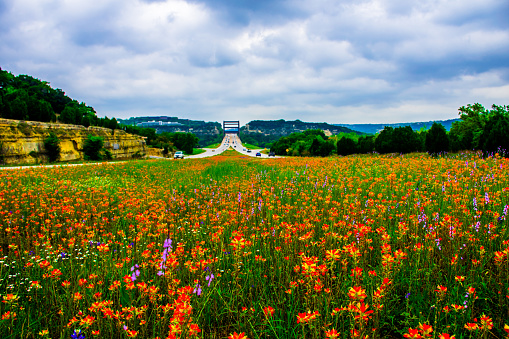 501329818 istock photo Pennybacker Bridge Middle of Wildflower Field Central Texas 470768346