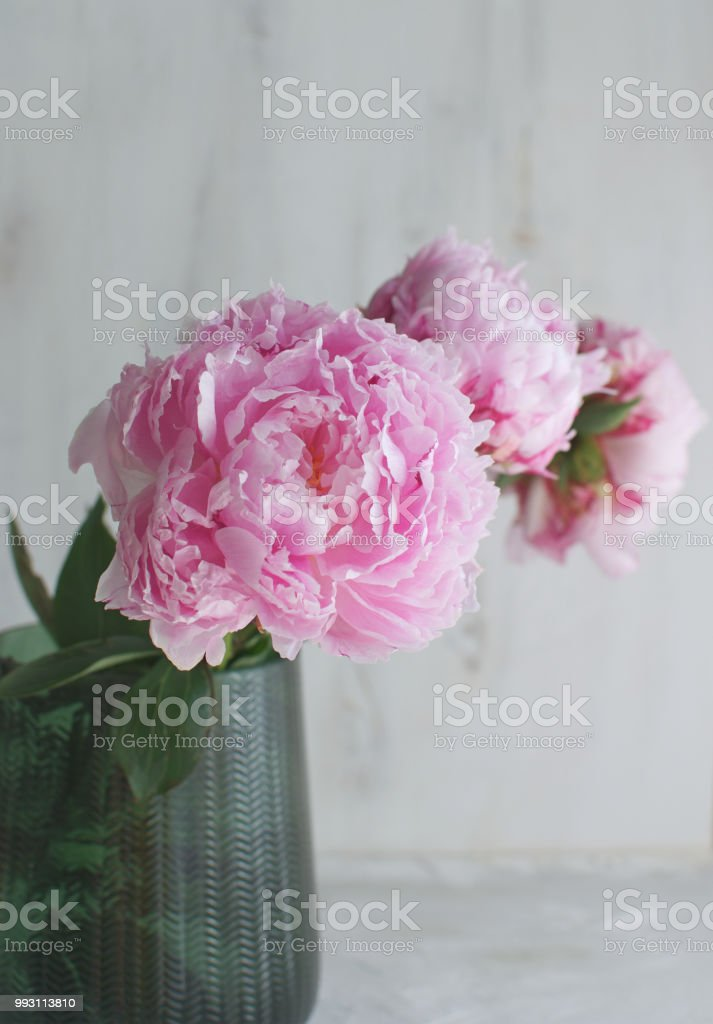 Peonies Flowers White White Vase Background Wedding Theme Copy Space