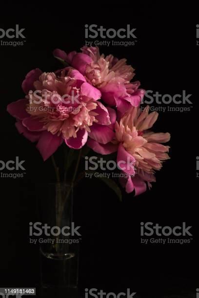 Peonies in pink picture id1149181463?b=1&k=6&m=1149181463&s=612x612&h=h6ivuv854aw91fmohk34mr6i f9z7ins0mrftknaxj0=