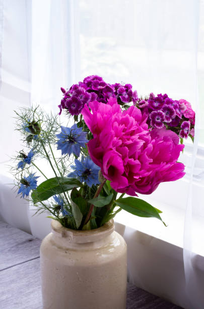 Peonies, Nigella and Sweet William against a window stock photo