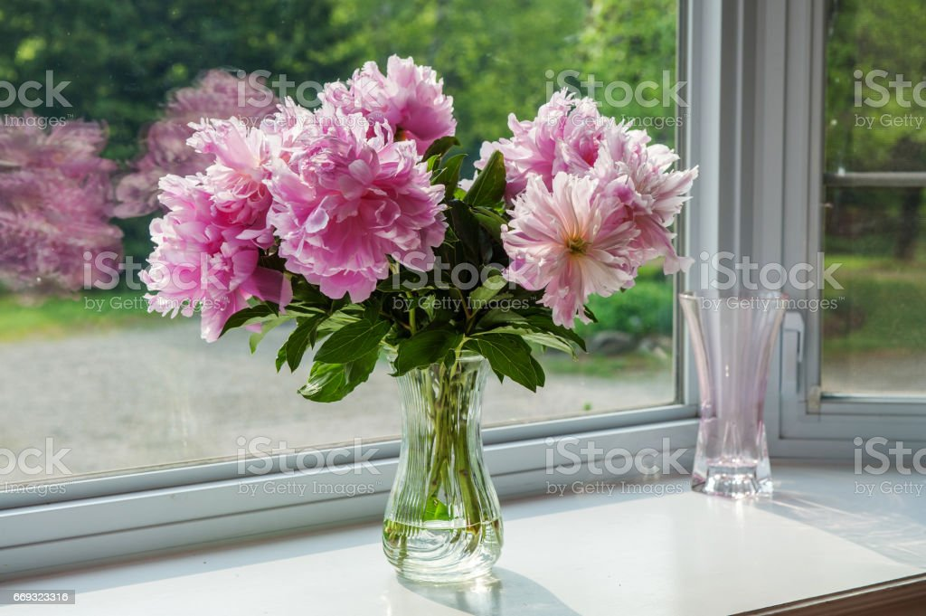 Peonies on a window sill – Foto