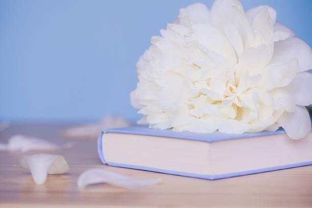 Pfingstrose Blume und Buch auf blauem Hintergrund – Foto