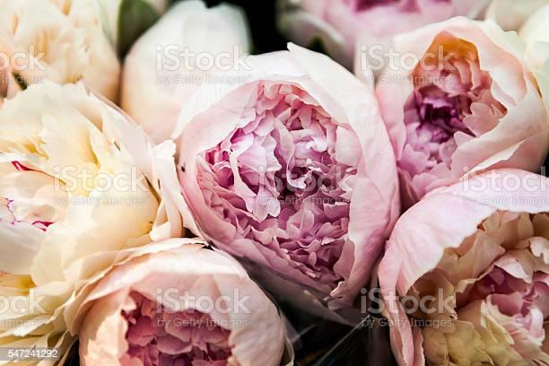 Peony flower arrangement picture id547241292?b=1&k=6&m=547241292&s=612x612&h=vlgnd9gaqj9ii635p2urgzxbldlk5sk2vjw9h 2dwcy=