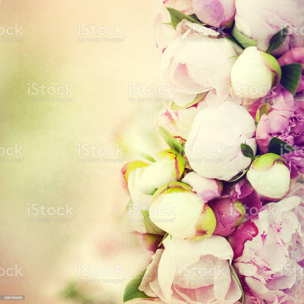 Peony flower background. stock photo