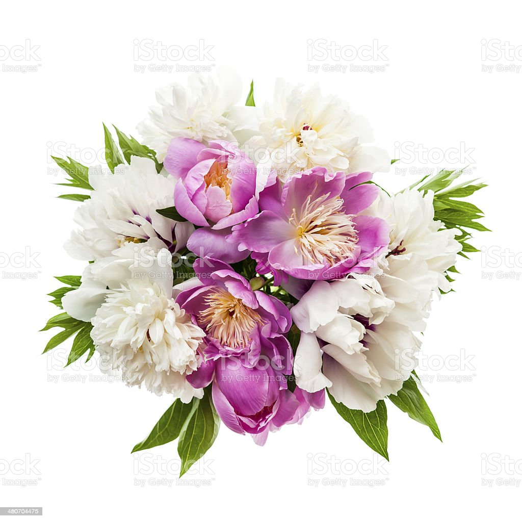 Peony flower bouquet isolated stock photo