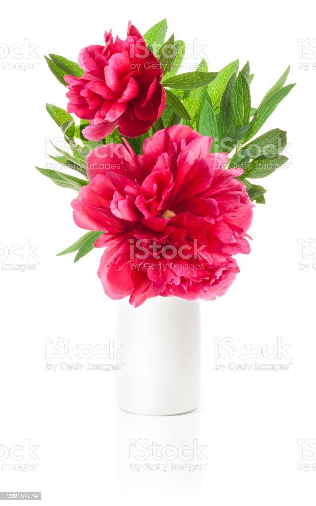 Peony bloem in witte vaas geïsoleerd op wit - Royalty-free Begroeten Stockfoto