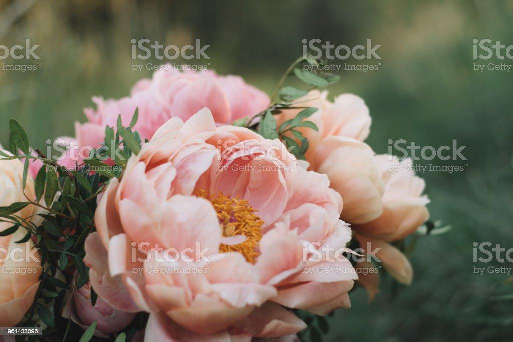 Flor de Peônia - Foto de stock de Bouquet royalty-free