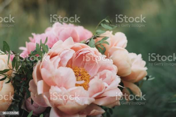 Foto de Flor De Peônia e mais fotos de stock de Bouquet
