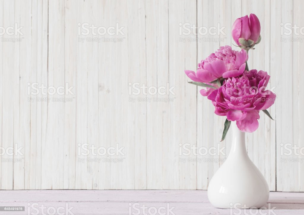 Peony flowers in  vase on white background stock photo