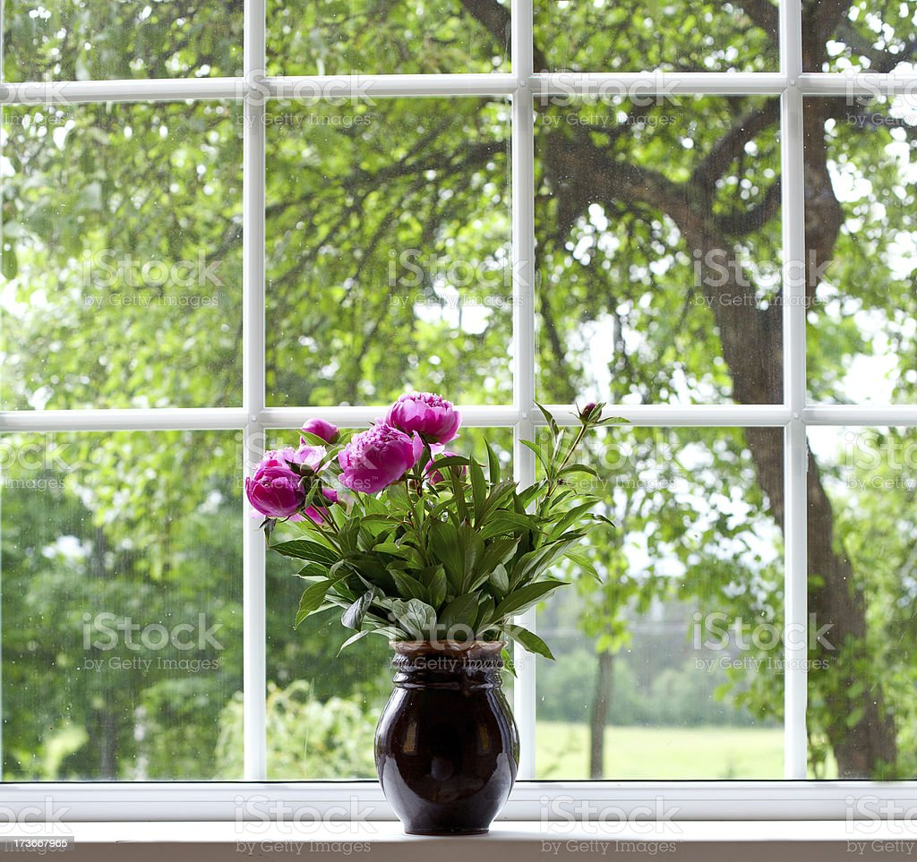 peony flowers on widnow-sill stock photo