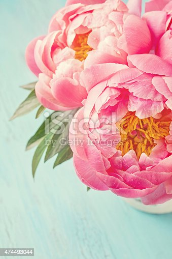 Peony Flowers Stock Photo & More Pictures of 2015
