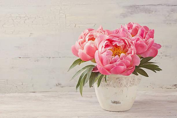 Peony flowers picture id478247630?b=1&k=6&m=478247630&s=612x612&w=0&h=upnrizigca1hrwdj1hmf7z38fgtxrrr1ze52ups0d70=
