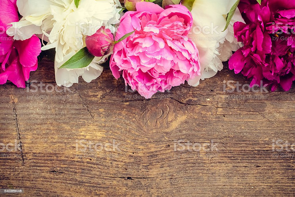 Peony horizontal background stock photo