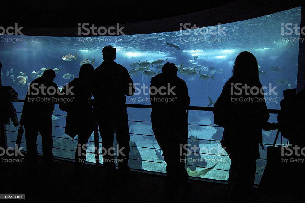 People admire fishes in aquarium royalty-free stock photo