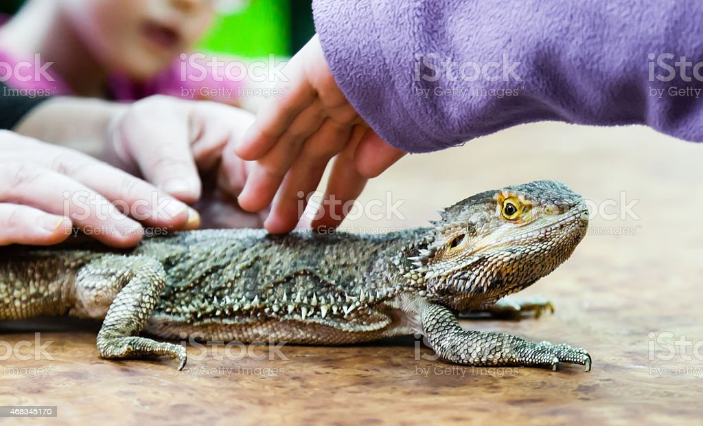 People and big lizard royalty-free stock photo