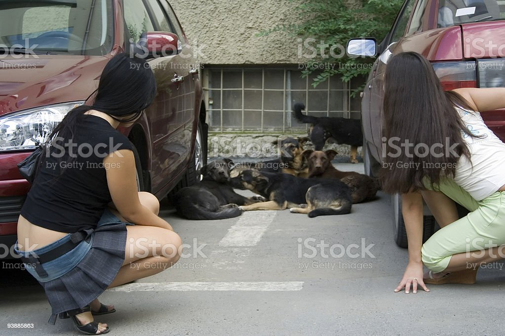 People and dogs. royalty-free stock photo