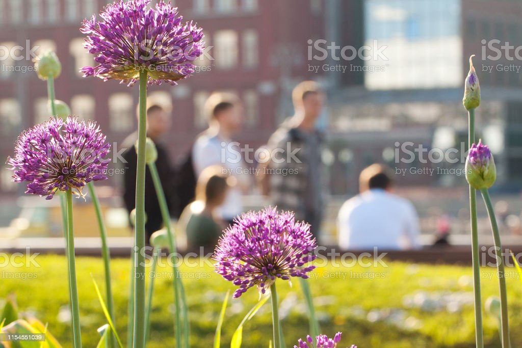 city view with people, buildings and flowers growing on a lawn in the...