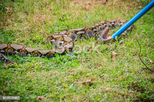 People Are Catching Snake In The Garden With Snake Catcher ...
