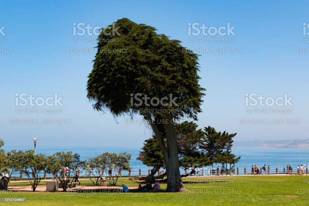 People At Ellen Browning Scripps Park Near Lorax Tree Stock Photo Download Image Now Istock