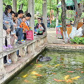 Families feeding a black swan and goldfishes at Green Lake Park in Kunming city, Yunnan province, China. 04/26/2016.