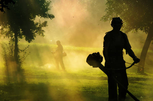 People cutting grass with brush cutter outdoor stock photo