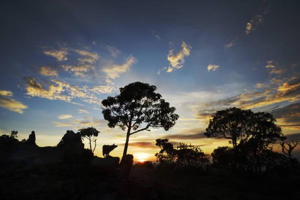 Povos, silhuetas do cão e das árvores no nascer do sol em Brasil - foto de acervo
