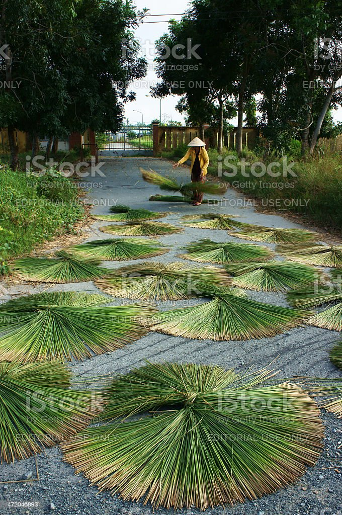 People dry rush (sedge)  in sector shape stock photo