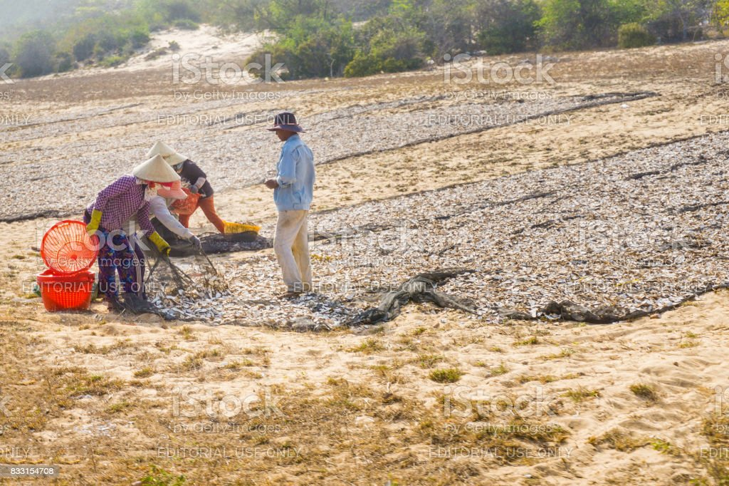 People drying fishes stock photo