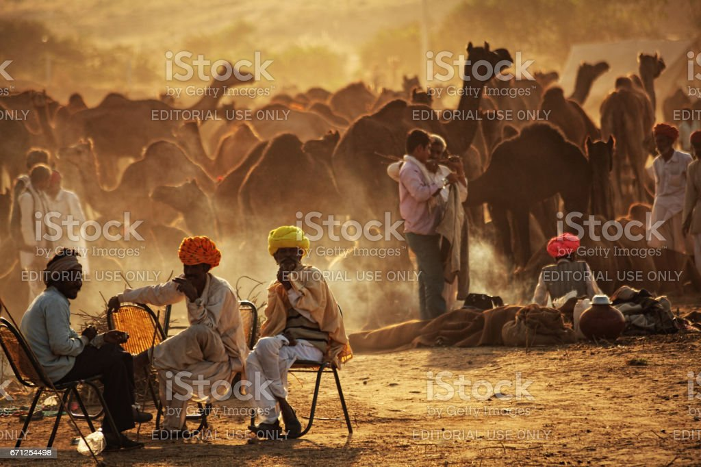 People engaged in trading of camels at Pushkar fair, stock photo