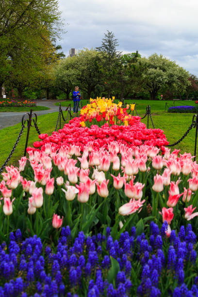 People enjoying tulips on display in Washington Park Albany NY on a rainy afternoon in spring stock photo