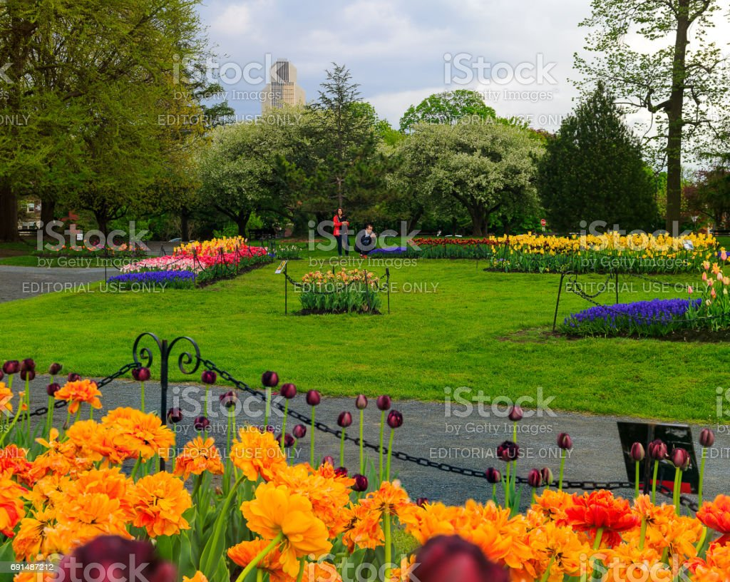 People Enjoying Tulips On Display In Washington Park Albany NY On A Rainy  Afternoon In Spring