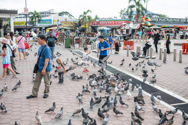 People feed pigeons in front of Batu Caves, Malaysia Batu Caves, Malaysia - February 22, 2018: People feed pigeons in front of the entrance to the Hindu shrines at Batu Caves. batu caves stock pictures, royalty-free photos & images