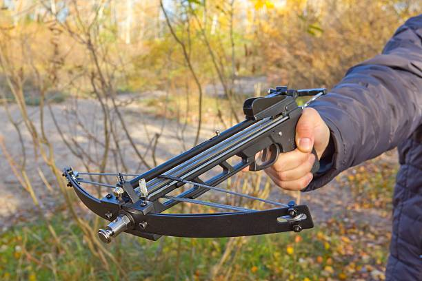 people hand holding a crossbow - crossbow stock pictures, royalty-free photos & images