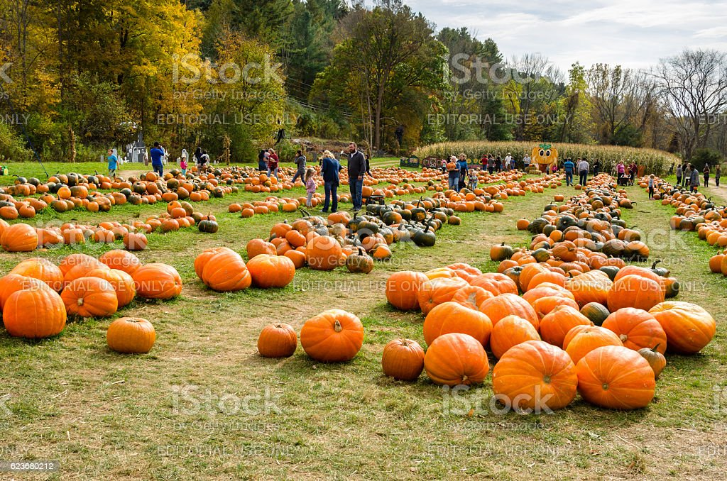 People Having Fun at the Pumpkin Feast stock photo