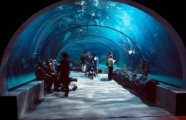 People in a water tunnel. People in a water tunnel. aquarium stock pictures, royalty-free photos & images