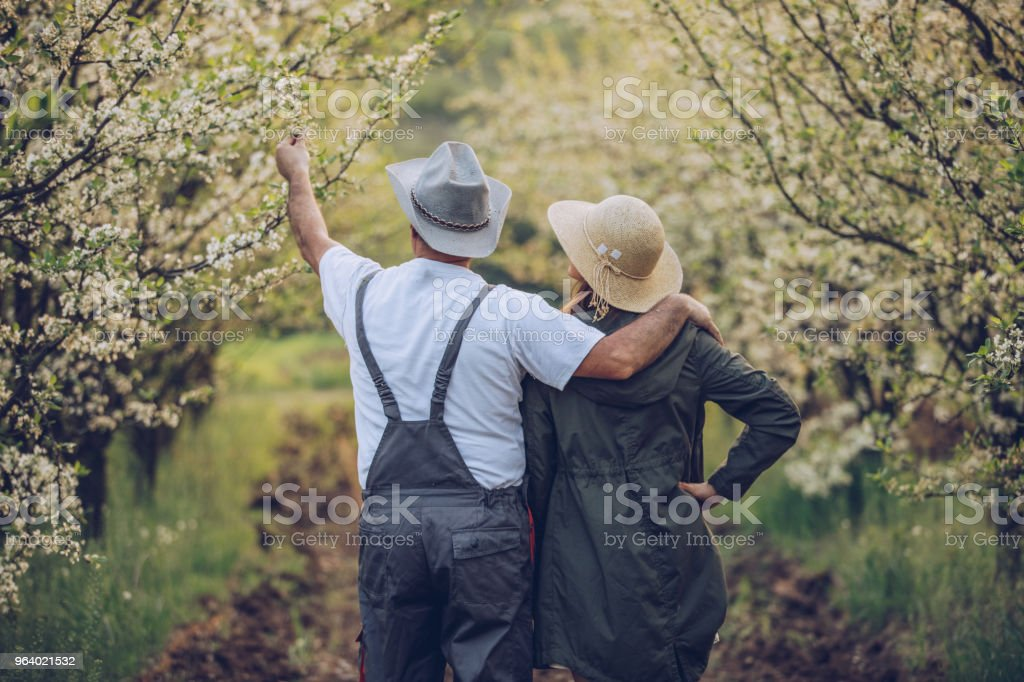 People in beautiful orchard - Royalty-free Active Seniors Stock Photo
