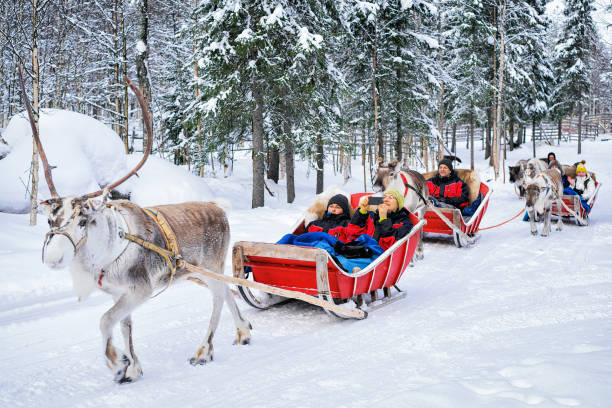 people in reindeer sledge caravan safari in winter forest rovaniemi - finland stock pictures, royalty-free photos & images