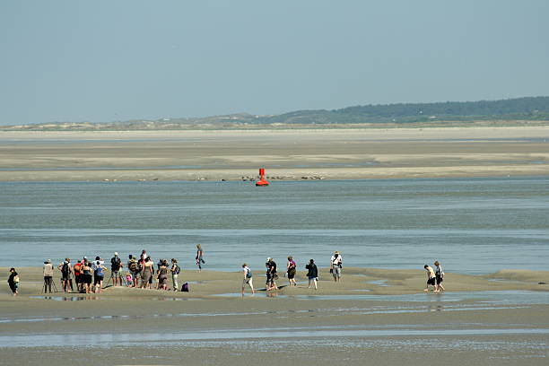 People in somme bay Le Hourdel, France - May 31, 2006: People in Somme bay,Picardy region of France.  , At Le Hourdel people come to observe the harbor seal (Phoca vitulina)) colony that is visible at low tide. somme stock pictures, royalty-free photos & images