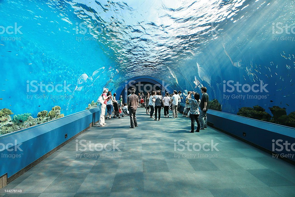 People inside a aquarium tunnel​​​ foto